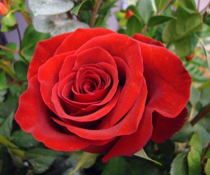 The Gardener's Flower